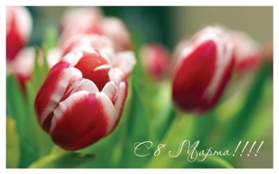 C 8 марта поздравляем милых дам!